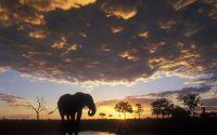 Одинокий слон вечером у водоема