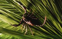 Скорпион в траве