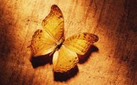 Красивая желтая бабочка под лучами солнца