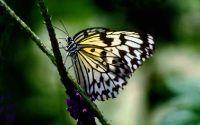 Маленькая бабочка сидит на травинке