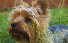 Маленькая собачка в траве
