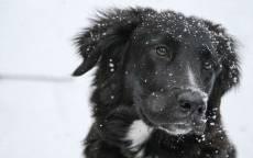 Черная собака, снег, снежинки, зима