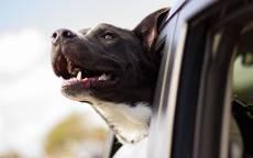 Собака, машина, окно, ветер
