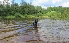 Река Осуга, Тверская область, Собачка в тельняжке купается в рек