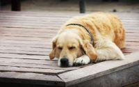 Сон собаки