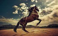 Конь на пляже