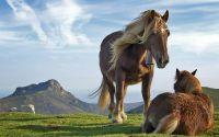Горные лошади