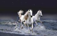 Три белые лошади