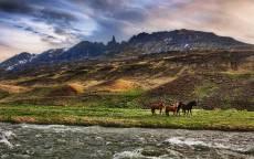 Дикие лошади у горной реки