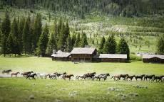 Табун лошадей бежит по полю