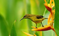 Райская птица на цветке