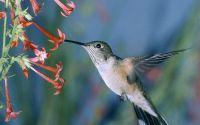 Завтрак райской  птицы