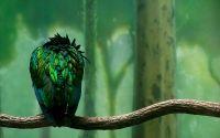 Спящая зеленная птица