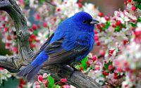 Маленькая синяя птичка