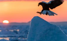 Орел над снежной вершиной