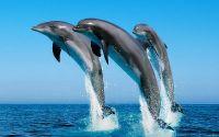 Дельфины выпрыгивают из воды