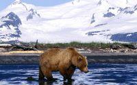 Бурый медведь на фоне снежной горы