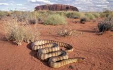 Змея в пустыне
