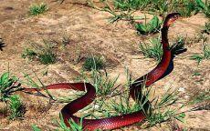 Плюющая кобра