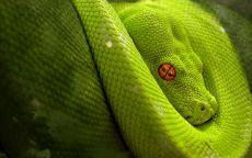 Змея зеленная