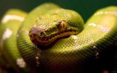 Хищник змея