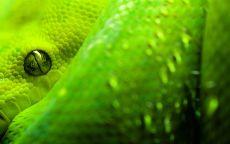 Глаз зеленого змея