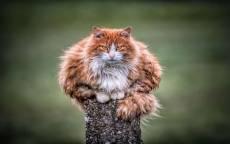 уличный рыжий кот на пне