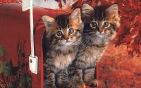 Котята в почтовом ящике