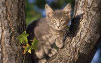 Серый котенок на дереве