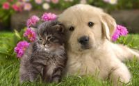 Котенок с щенком