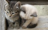 Котята на подоконнике