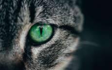 Зеленый кошачий глаз