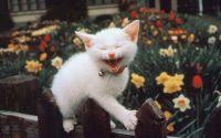 Белый котенок с колокольчиком
