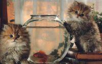 Котята на рыбалке