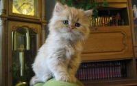 Котенок в кабинете