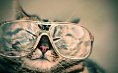Кот в очках, прикол, кот, очки