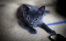 Черный котёнок