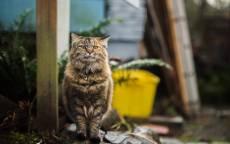 Полосатый кот сидит на камнях
