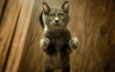 Смешной котик просится на ручки
