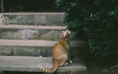 Рыжая кошка сидит на ступенях и нюхает кусты