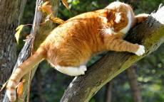 Дикий рыжий кот залез на дерево