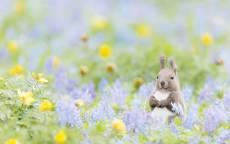 Белка спряталась на цветочной поляне