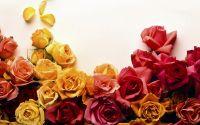 Открытка Желтые и красные розы