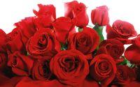 Открытка, Букет, красные розы