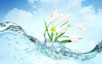 открытка, нежность, цветы, вода, волны