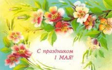 С праздником 1 мая,  весенние цветы