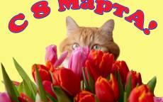 Поздравление с 8 марта кот и тюльпан