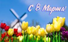 С 8 марта мельница и тюльпаны