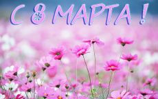 С 8 марта луговые цветы