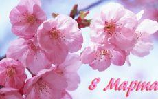 8 марта розовые цветы
